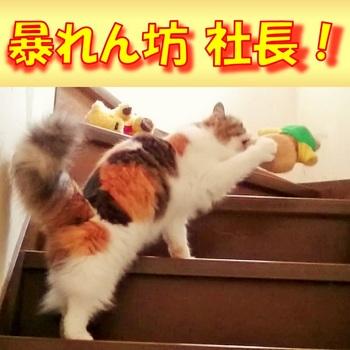 ウチの社長は暴れん坊!.jpg